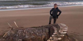 Huragan wydobył zwłoki potwora z Loch Ness? Foto: FB