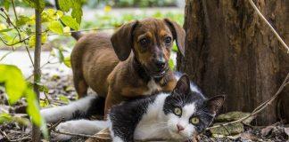 Pies i kot. Zdjęcie ilustracyjne. Źródło: pixabay